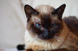 problemy starszych kotów