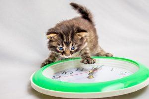jak oswoić kota z transporterem